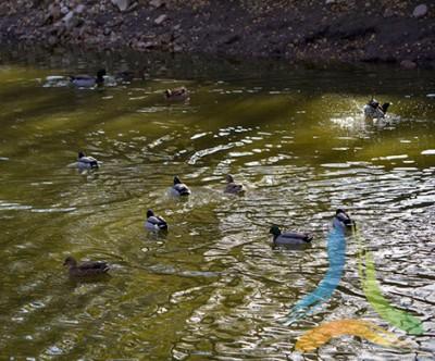 Parque Biológico Serra das Meadas